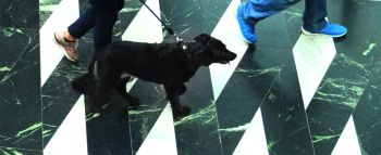 Hartz-IV-Aufstocker und Versicherungspflicht für Hunde