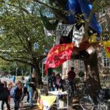 """Baumhaus in Münster: """"Was wir hier tun, ist Klimanotwehr"""""""